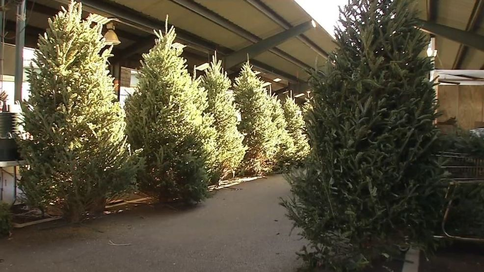 Fresh Christmas Tree.Big Brothers Big Sisters Of The Tri State Selling Fresh